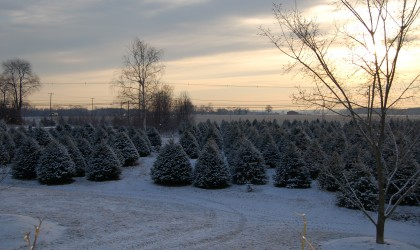Winter at the Tree Farm
